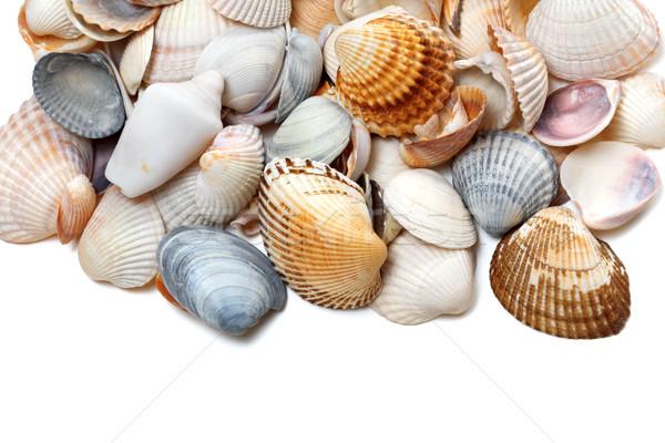 Conchiglie bianco isolato copia spazio spiaggia alimentare Foto d'archivio © BSANI