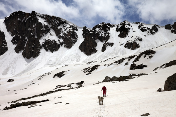 Hiker and dog in snowy mountains at spring Stock photo © BSANI