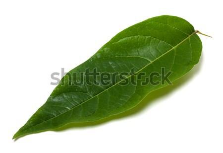 зеленый лист белый изолированный избирательный подход фон зеленый Сток-фото © BSANI