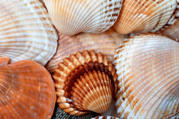 Obus plage océan shell animaux Photo stock © BSANI