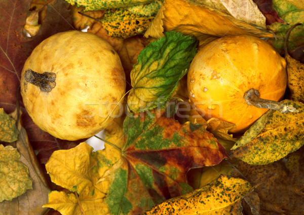 Two small decorative pumpkins on dry autumn multicolor leafs Stock photo © BSANI