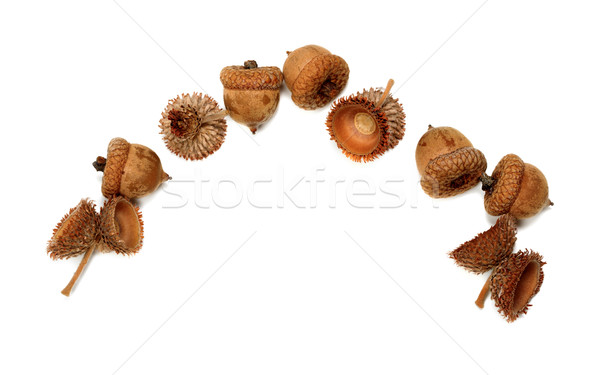 Autumn oak acorns Stock photo © BSANI
