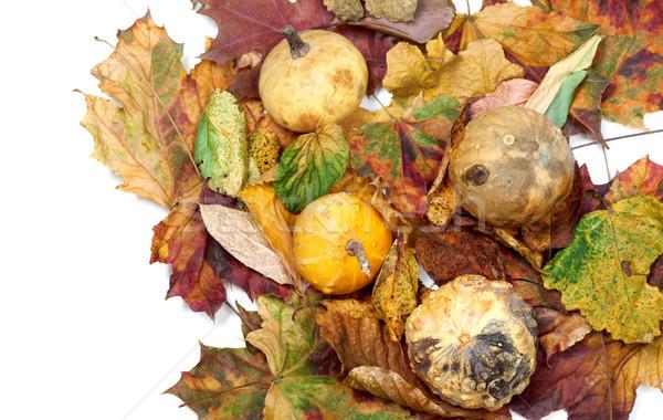 Four small decorative pumpkins on dry autumn multicolor leafs Stock photo © BSANI