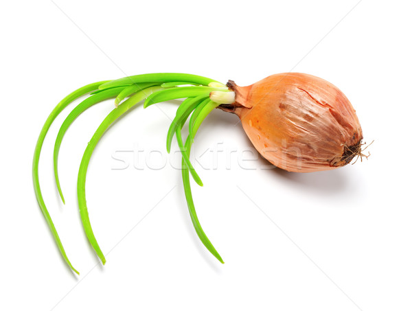 Spring onions (Allium cepa) Stock photo © BSANI