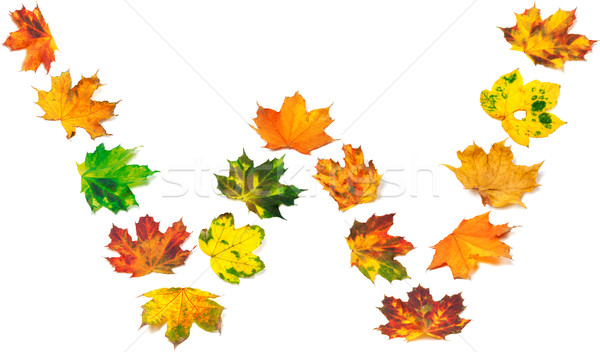 Letter W composed of autumn maple leafs Stock photo © BSANI