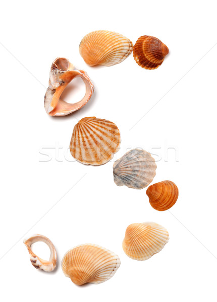Letter S composed of seashells Stock photo © BSANI