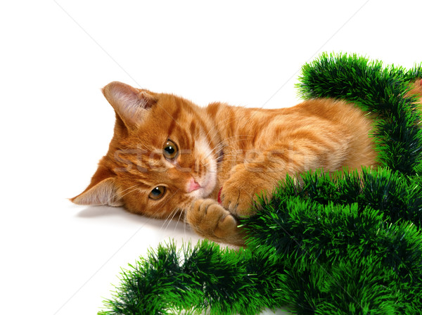 Red-headed kitten lying on its side and play with Christmas deco Stock photo © BSANI