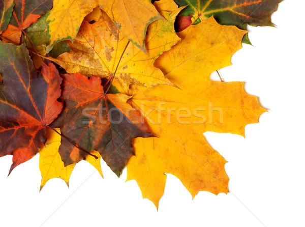 Sonbahar yalıtılmış beyaz doğa dizayn arka plan Stok fotoğraf © BSANI