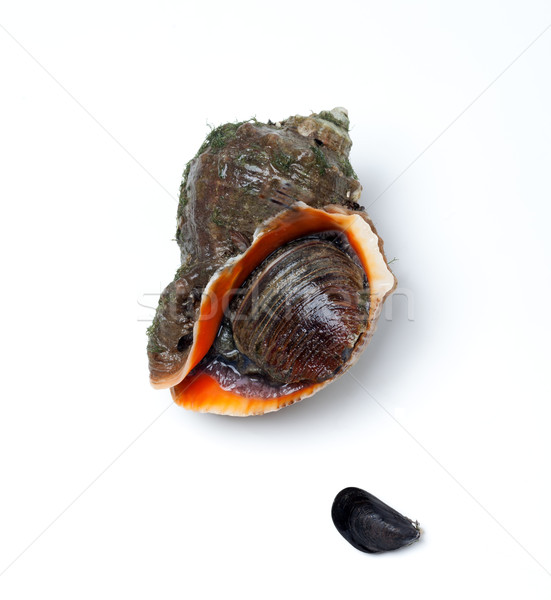 Veined rapa whelk and small mussel Stock photo © BSANI