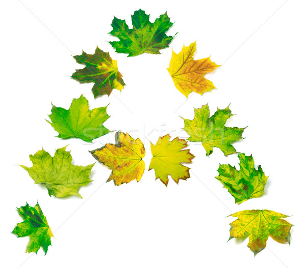 Letter A composed of yellowed maple leafs Stock photo © BSANI