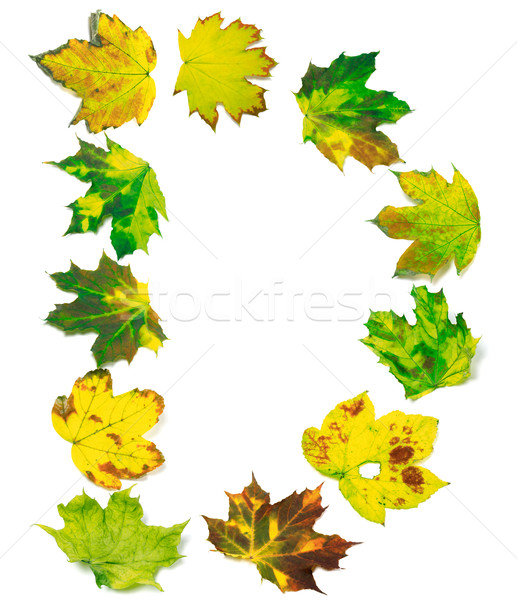 Letter D composed of maple leafs Stock photo © BSANI