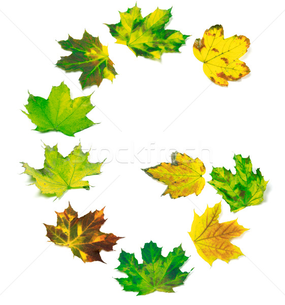 Letter G composed of yellowed maple leafs Stock photo © BSANI