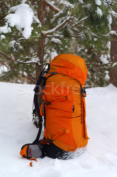 Backpack in snow forest Stock photo © BSANI