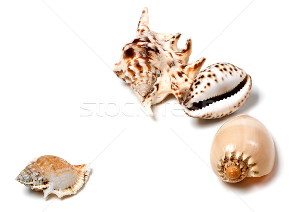 Stock photo: Exotic seashells on white