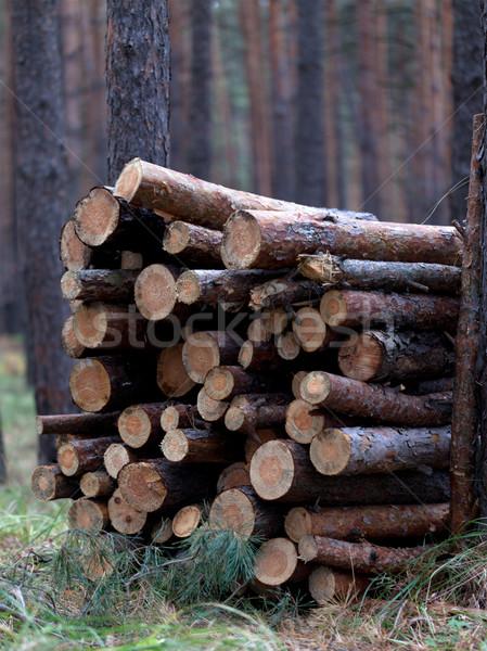 Lenha pinho floresta ver Foto stock © BSANI