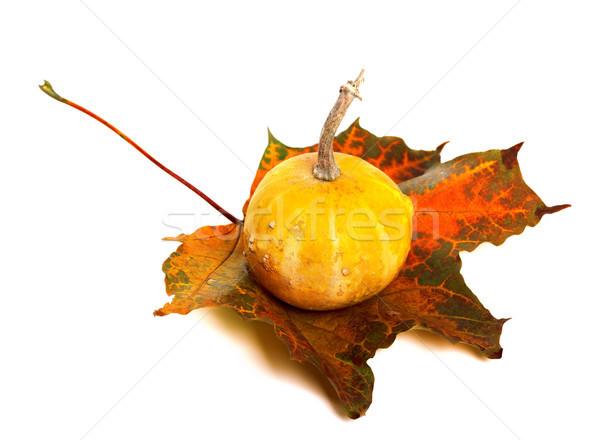 декоративный тыква осень изолированный белый продовольствие Сток-фото © BSANI