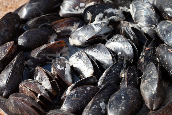 Freshly cooked mussels on sea coast at sun summer day Stock photo © BSANI