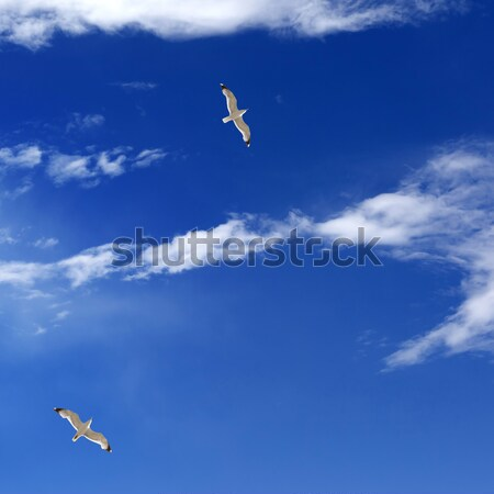 Two seagulls hover in clear sky Stock photo © BSANI