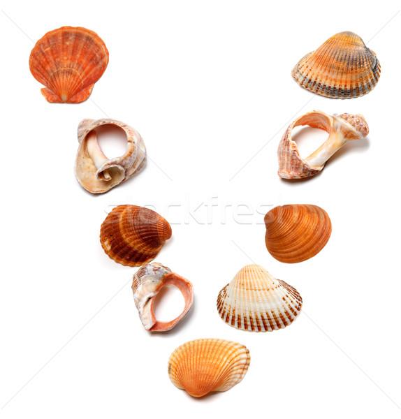 Letter V composed of seashells Stock photo © BSANI