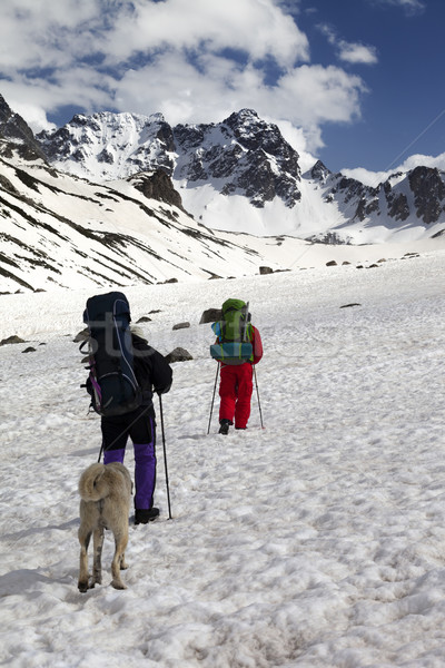 Dog and two hikers in snowy mountains Stock photo © BSANI