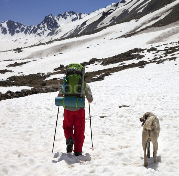 Hiker with dog in snowy mountains at spring Stock photo © BSANI