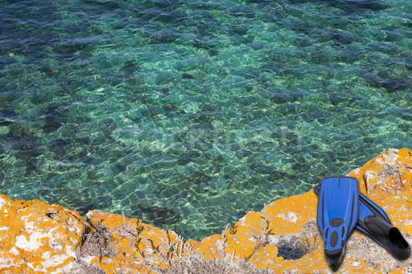 Blue flippers on the cliff of sea Stock photo © BSANI