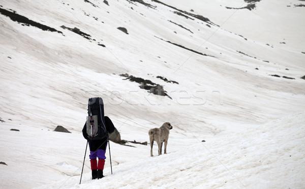 ハイカー 犬 雪 山 春 グレー ストックフォト © BSANI
