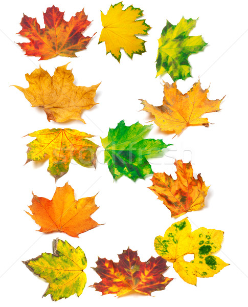 Letter B composed of autumn maple leafs Stock photo © BSANI