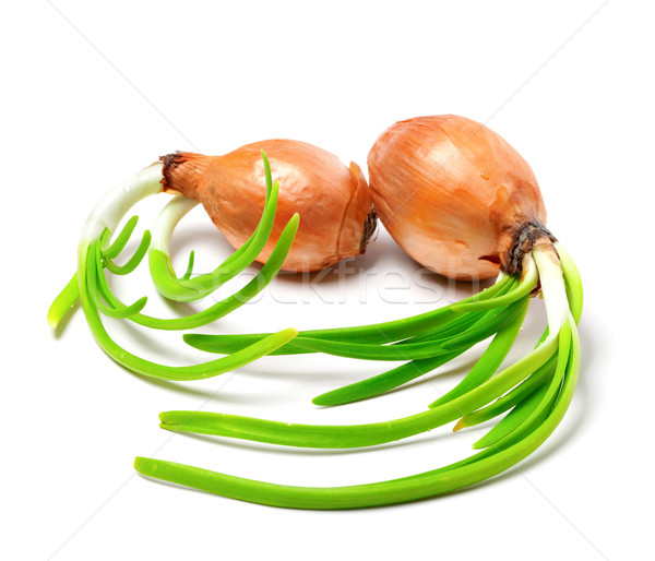 Two spring onions (Allium cepa) Stock photo © BSANI