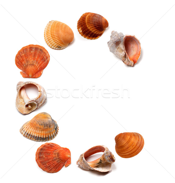 Letter C composed of seashells Stock photo © BSANI