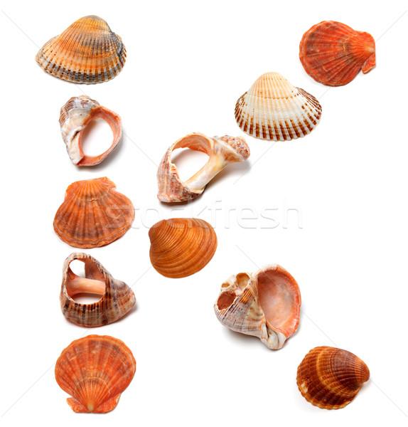 Letter K composed of seashells Stock photo © BSANI