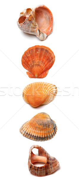 Letter I composed of seashells Stock photo © BSANI