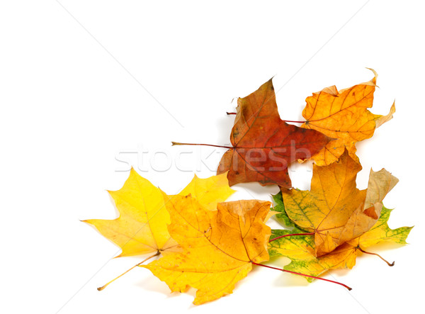 Autumn dry maple leafs at corner Stock photo © BSANI