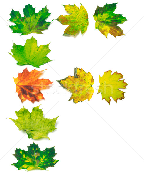 Letter F composed of yellowed maple leafs Stock photo © BSANI