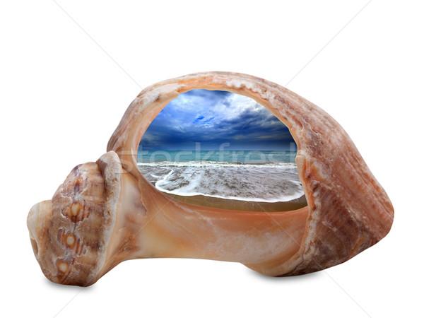 Deniz plaj gelgit kırık kabuk yalıtılmış Stok fotoğraf © BSANI