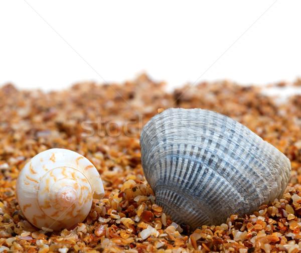 Due conchiglia sabbia bianco copia spazio natura Foto d'archivio © BSANI