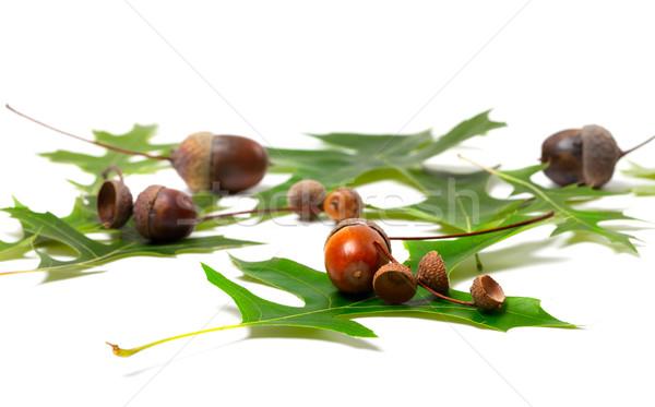 Acorns and green leafs of oak  Stock photo © BSANI