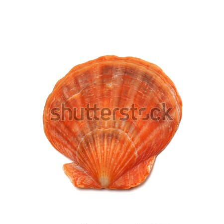 Scallop shell isolated on white background Stock photo © BSANI