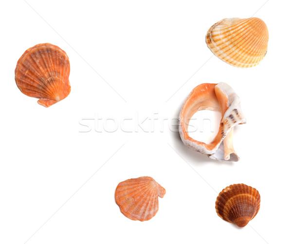 Seashells and broken rapana  Stock photo © BSANI