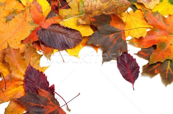 Sonbahar renkli akçaağaç yaprakları doğa Stok fotoğraf © BSANI