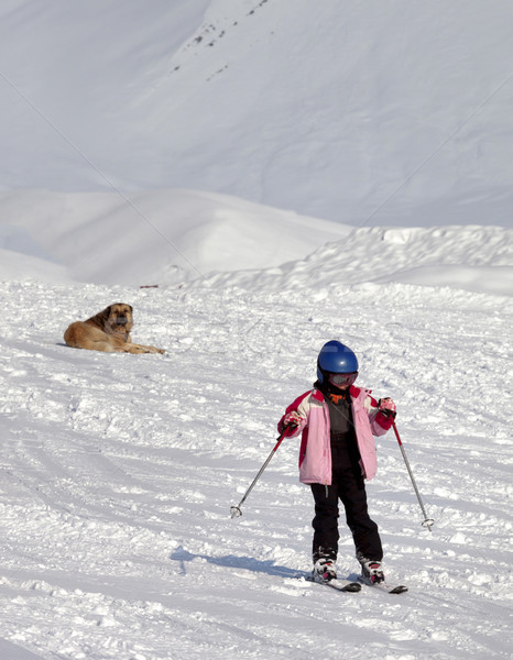Little skier and dog on ski slope at sun winter day Stock photo © BSANI