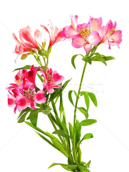 Virágcsokor liliomok izolált fehér levél zöld Stock fotó © BSANI