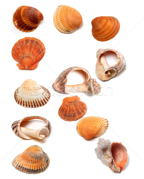 Letter R composed of seashells Stock photo © BSANI
