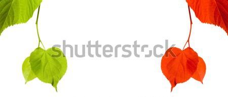 Vert rouge blanche isolé espace de copie arbre Photo stock © BSANI