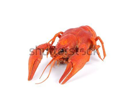 Boiled crawfish isolated on white background Stock photo © BSANI