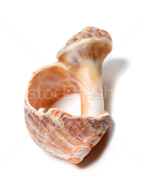 Broken rapana shell isolated on white background Stock photo © BSANI