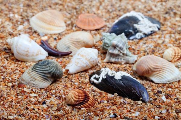 Seashells on sand in sunny day Stock photo © BSANI
