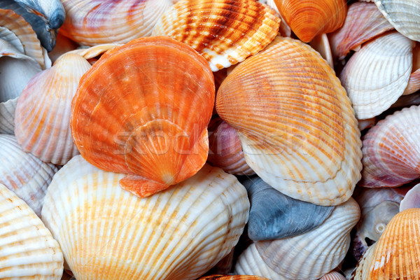 Shells of anadara and scallop Stock photo © BSANI