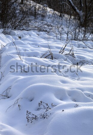 Snowdrifts in winter forest after snowfall Stock photo © BSANI