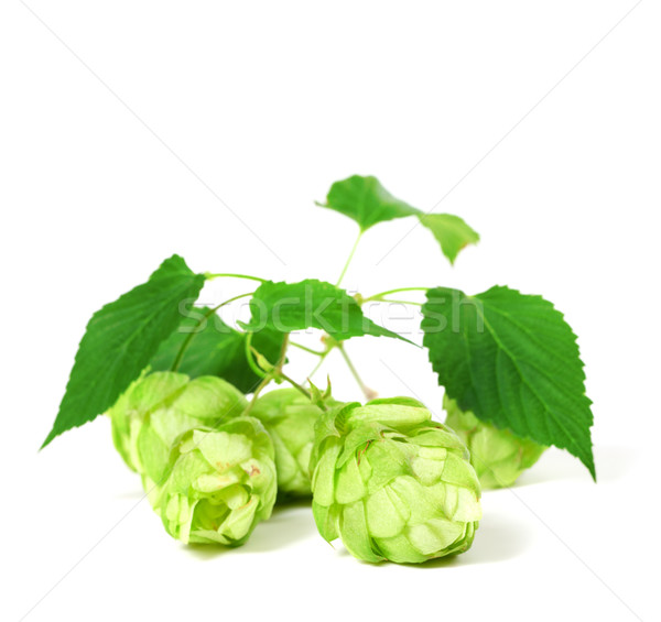 Fioritura hop foglie bianco primavera birra Foto d'archivio © BSANI